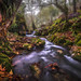 Autum in the Sierra Negra Highlands - Luis Lyons Photography