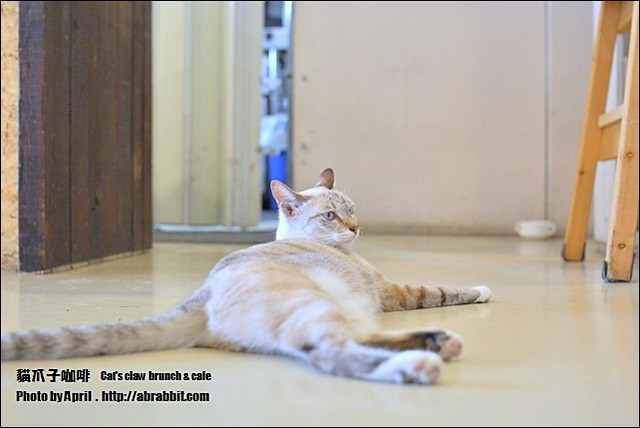 22533678341 1801ff2345 z - [台中]貓爪子咖啡--早午餐豐盛,店內有四隻貓兒超可愛!@北區 大德街 中國醫