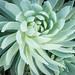 NolanSwirld.jpg by flower photo fanatic