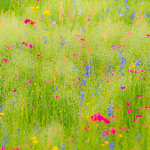Texas Wildflowers Workshop _2015_The Effect