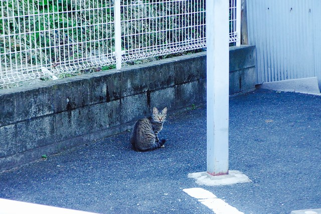 Today's Cat@2016-10-25