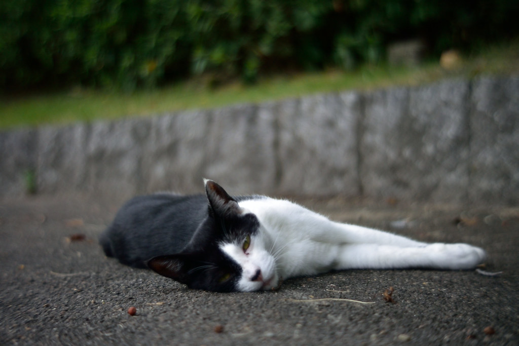 A cat in Mejo park 2015/08 No.2.