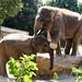 Yadanar & Gandhi by Ute's-Tierwelt