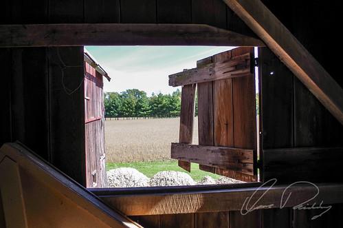 Barnyard View