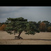 walking tree by Pesi