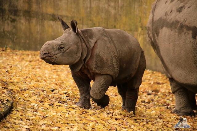 Tierpark Berlin 07.11.2015  0171