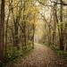 canal path by jody9
