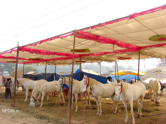 Animal Fair: Horse Fair: VIPs with high expectations