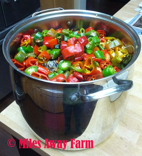 Pot of Hot Chilies