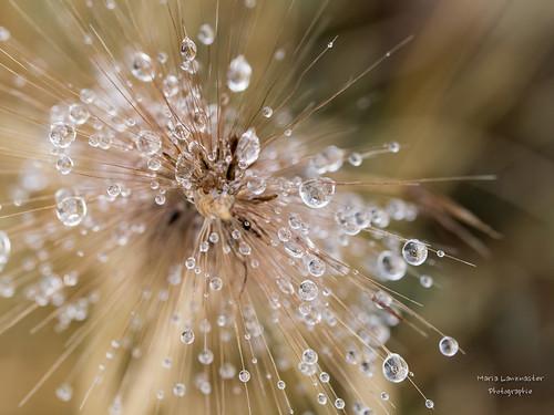 Die kleinen Wunder der Natur ...