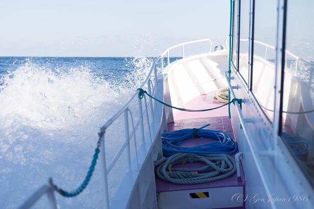 沖合クジラウォッチング
