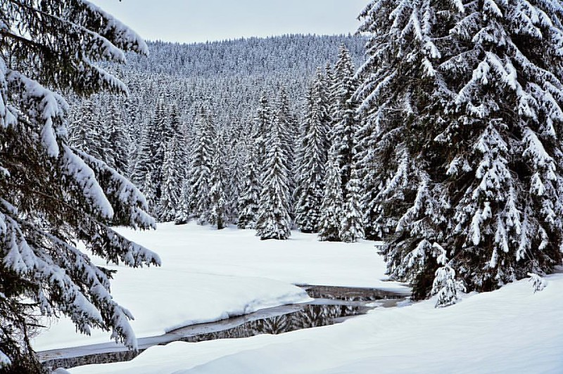 Winter in Montenegro.  Fotograf Sergej Zabijako, +38268129392 © Sergej Zabijako, © Promo-Montenegro, 2016. #черногория #montenegro #crnagora #promomontenegro #photosergejzabijako #photographer #photography #landscape #landscapephotogra