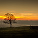 The obligatory lone tree at sunset. by Ian Emerson
