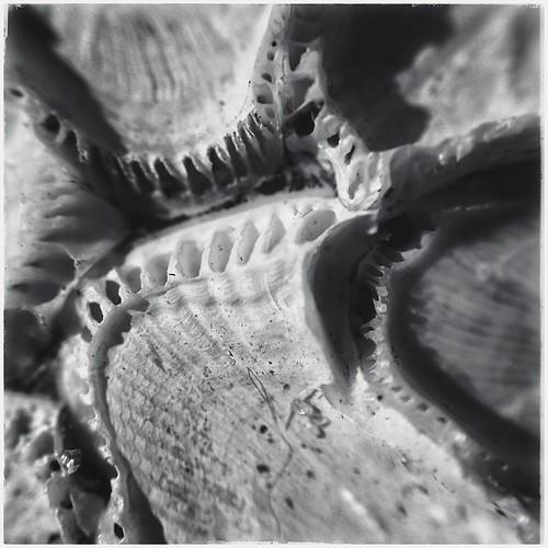 Sea Creature Remains - BW
