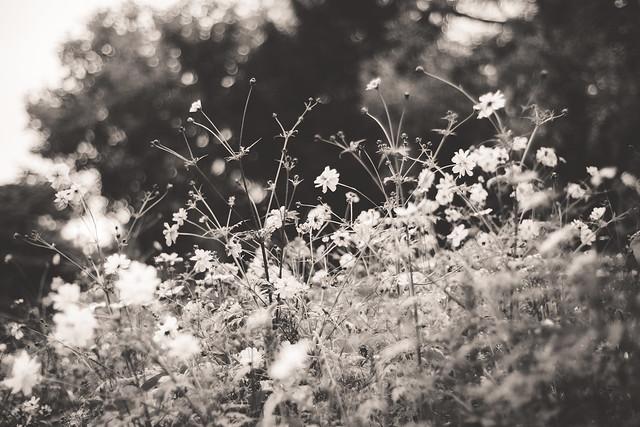Monochrome autumn