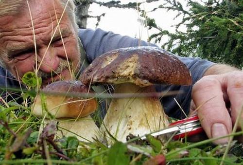 patentino raccoglitore funghi