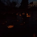 Geese all A-Glow