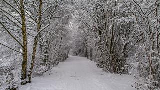 Winter weather 2010 - Steinse groen - omgeving Haastrecht