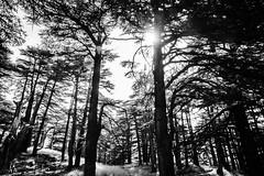 Sunny Cedars