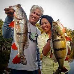 Ian e Eneida com um tucuna açú paca e outro açú fisgados no Rio Negro a bordo do Kalua Barco Hotel. Pescar na Amazônia  é um privilégio.   #pescaamadora #pesqueesolte #baitcast #fly #pescaesportiva #sportfishing #fishing #flyfishing #fish #bassfishing #ba