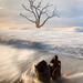 Constant Struggle....  Botany Bay, Edisto Island, South Carolina by jason_frye