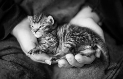 #kitten survivors