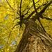 _DSC5467 vistas de otoño