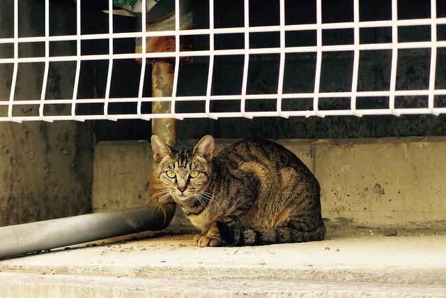 Today's Cat@2016-11-02