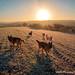 frosty dog walk 003