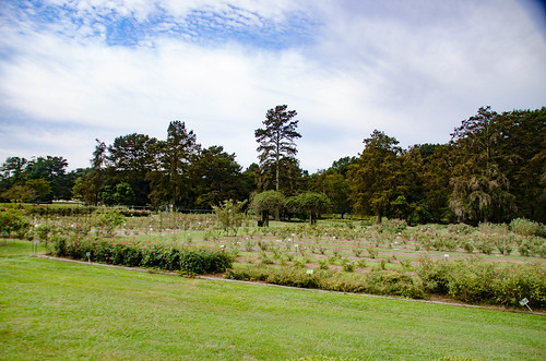 gardens us unitedstates southcarolina rambling edisto highway301 orangeburg mossheights tobaccotrail