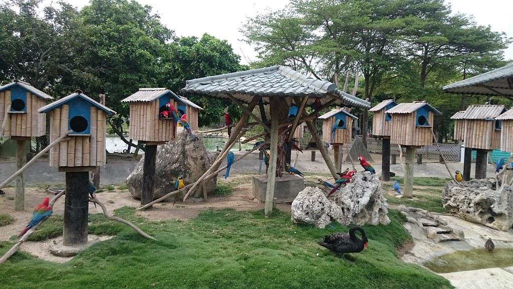 台南市學甲區頑皮世界野生動物園區 (116)