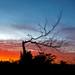 Tree by ktischlinger