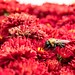 Bee in a Sea of Mum