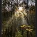 In  the Spotlight by SFB579 Namaste