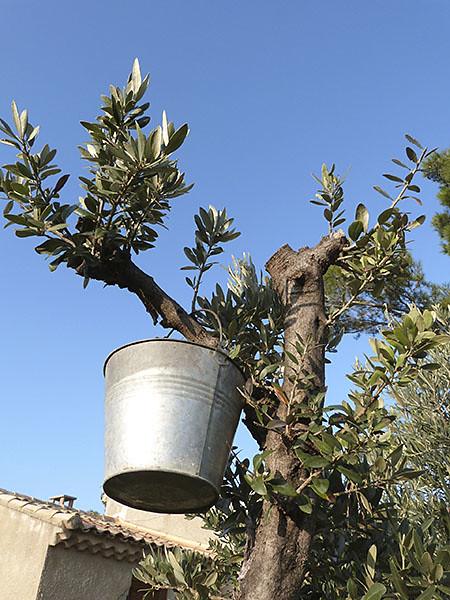 seau sur l'olivier