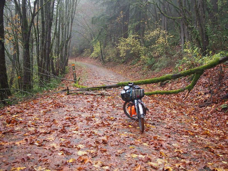 Snoqualmie Valley Trail: Downed Tree #2: This one is between Fall City and Carnation, and was easy to get around.