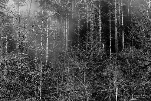 blackandwhite usa nature monochrome forest washington unitedstates northwest pacificnorthwest northamerica washingtonstate blackandwhitephotography naturephotography
