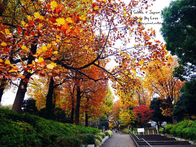 日本東京景點澀谷區代代木公園賞楓葉 (3)