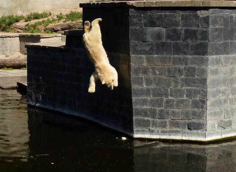 ...aaaaand JUMP!
