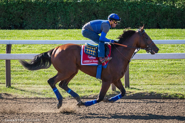 American Pharoah Taking a Trot