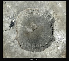 Meteor Crater - Coconino County, Arizona