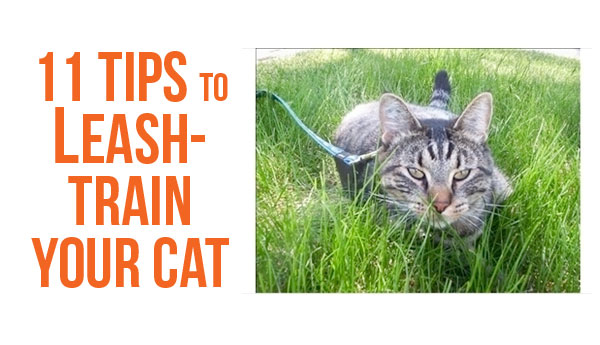 leash-train-cats-11-tips