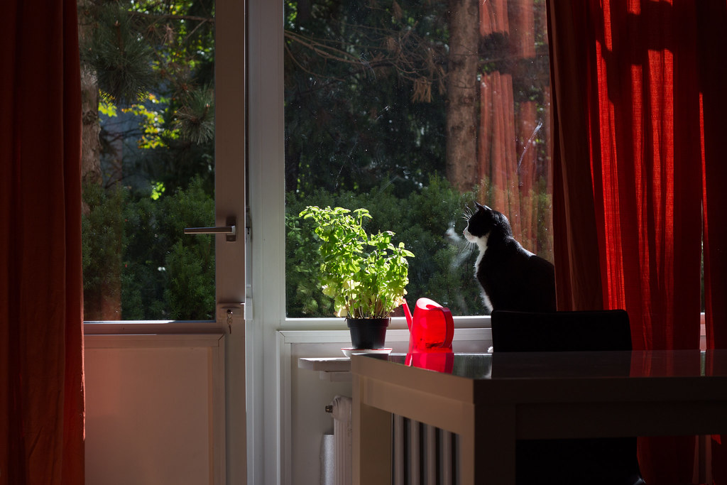 Kissa ikkunalaudalla, Berliini, Saksa