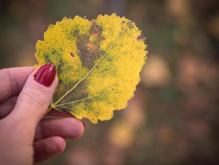 autumn_colors_lumene