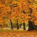 Golden Autumn Colors - Happy Halloween ! by Batikart