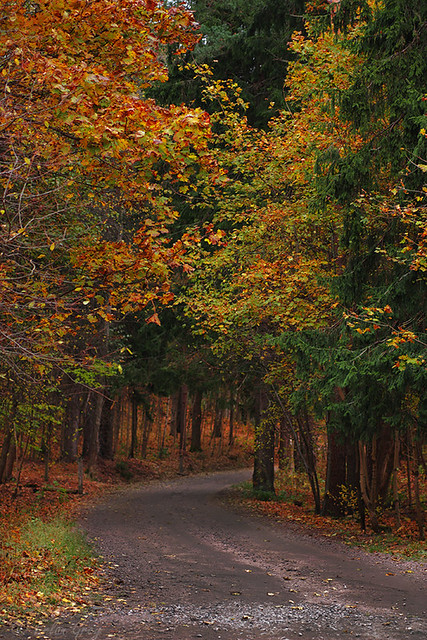 autumn_roads_18