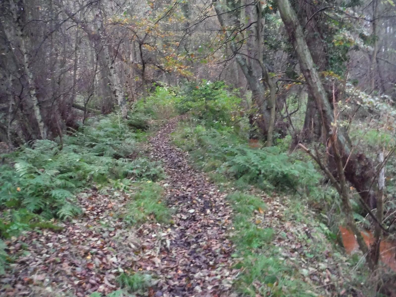 Flitwick Moor SWC Walk 232 Lidlington to Flitwick