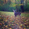 Park patron.  #hiking #nature #percywarnerpark #autumn #deer