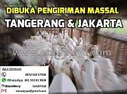 Dibuka Pengiriman Massal ke Tangerang & Jakarta November 2015 (Ditutup)