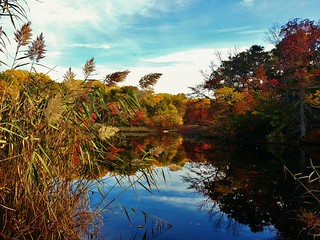 Beautiful Weinberg Pond Scene 2015